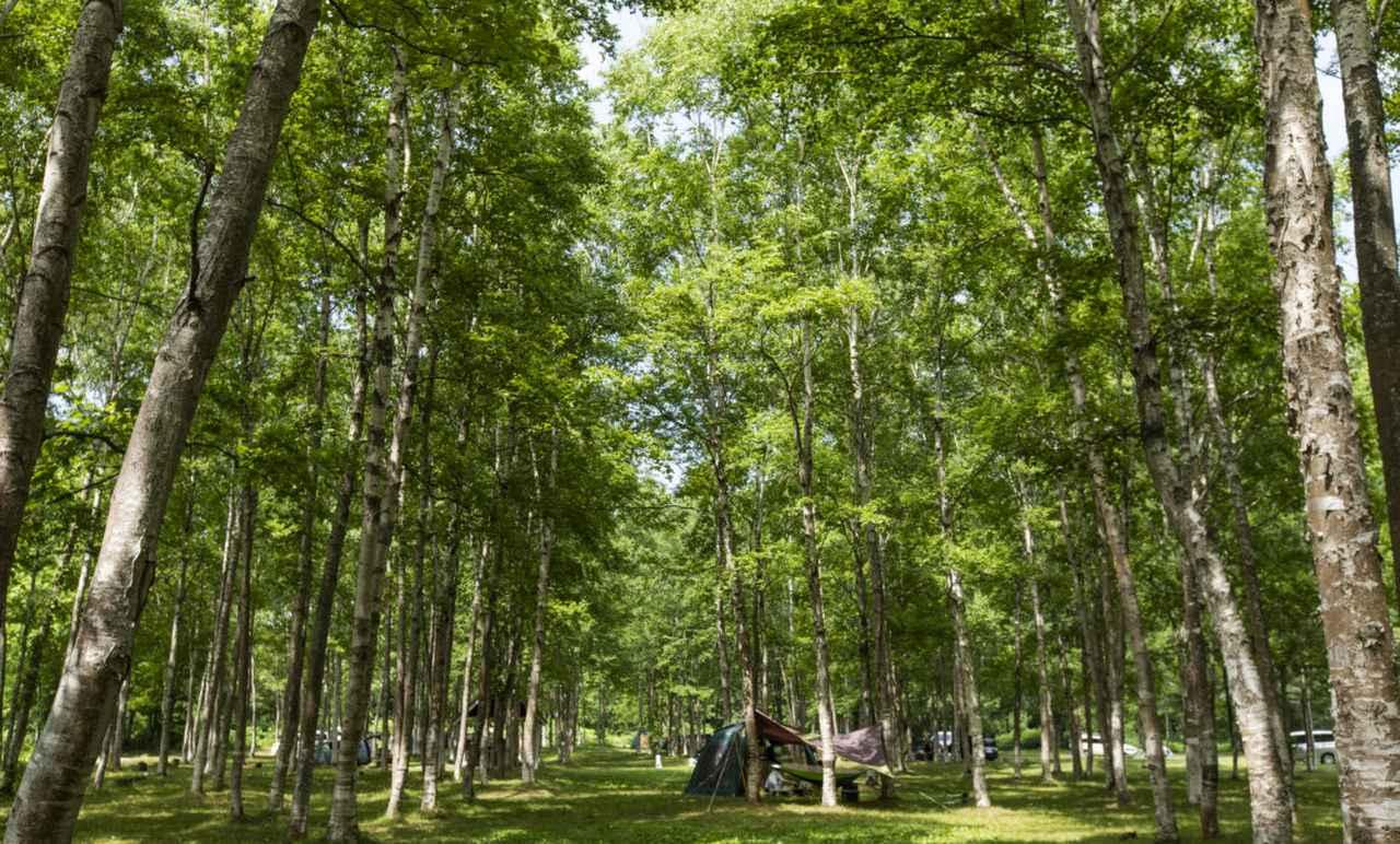 画像1: 【北海道】避暑は北国で。「アカイガワ・トモ・プレイパーク」