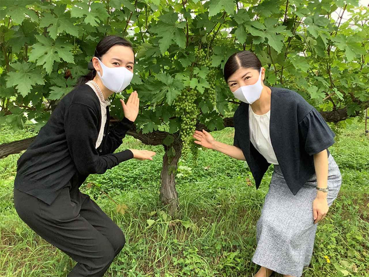 画像2: JALふるさと応援隊(京都府)が行く 京都府中部「森の京都」魅力再発見!