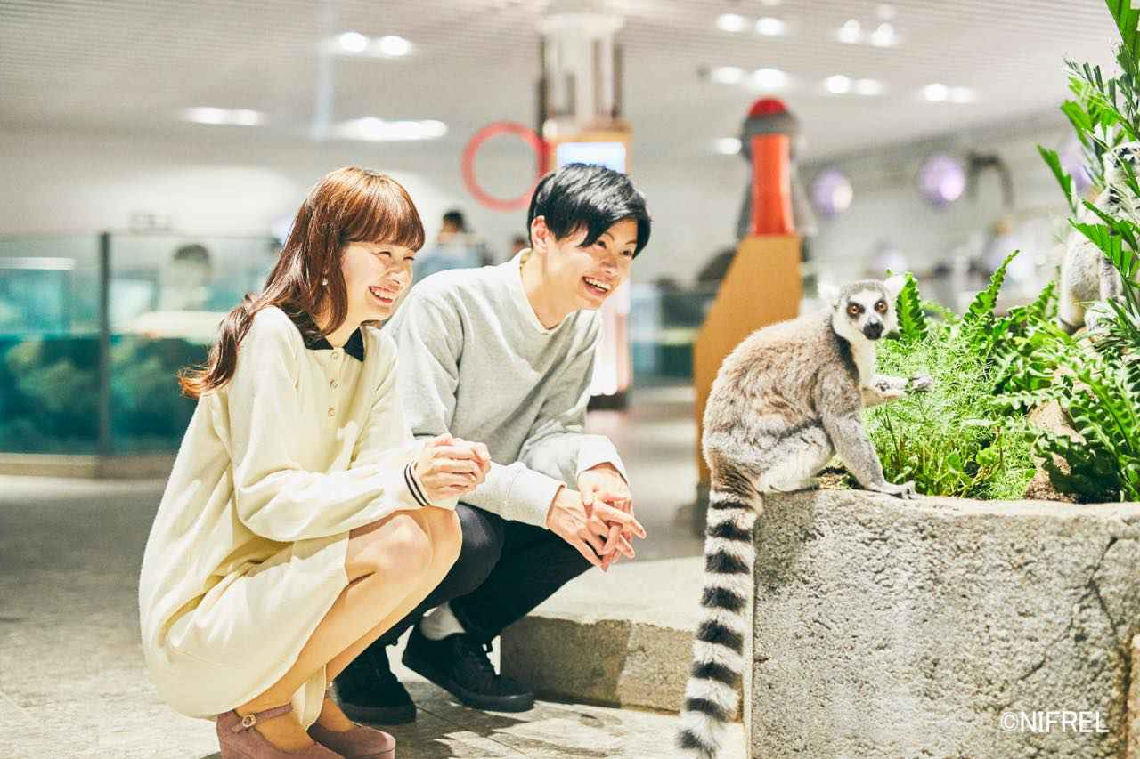画像1: 【大阪】ミュージアムのような空間づくりで、動物の知られざる姿を学べる「ニフレル」