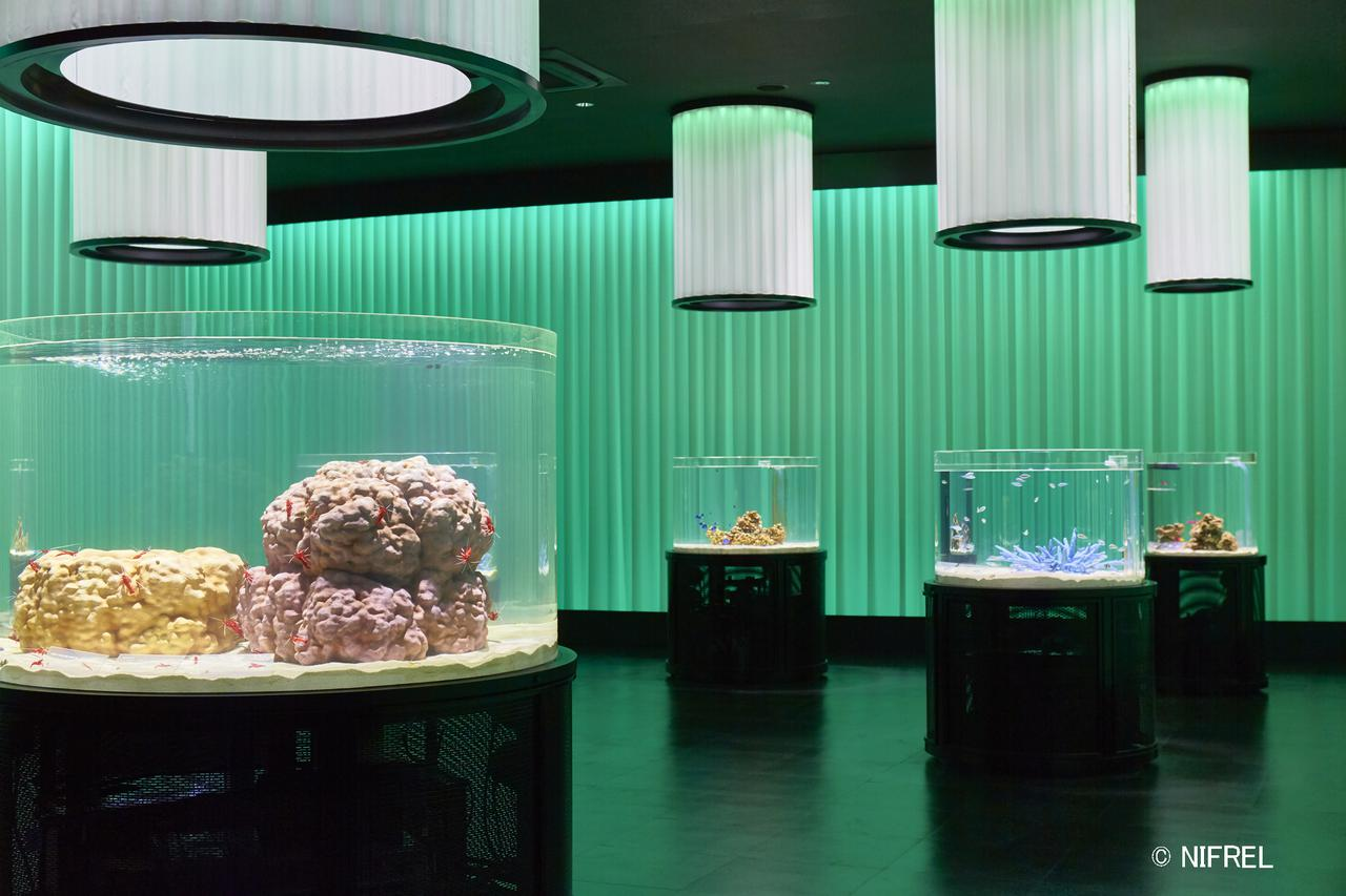 画像2: 【大阪】ミュージアムのような空間づくりで、動物の知られざる姿を学べる「ニフレル」