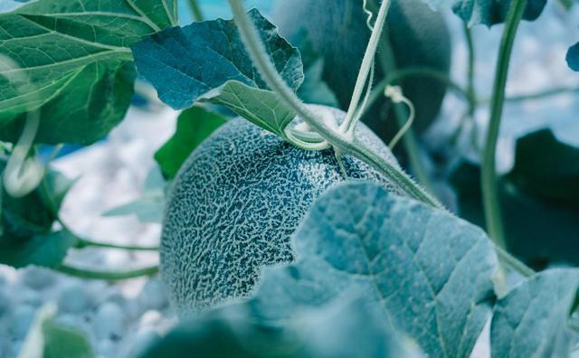 画像: melon-roman.com
