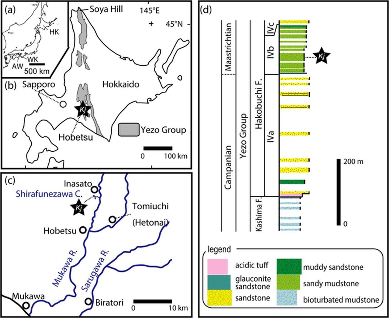 画像: A New Hadrosaurine (Dinosauria: Hadrosauridae) from the Marine Deposits of the Late Cretaceous Hakobuchi Formation, Yezo Group, Japan