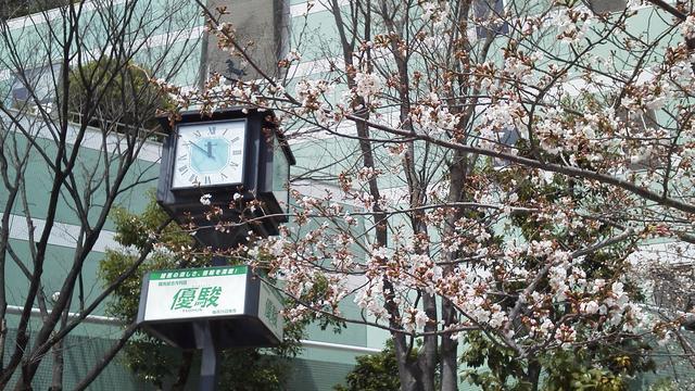 画像: 桜の時期には花見ができるところもある。