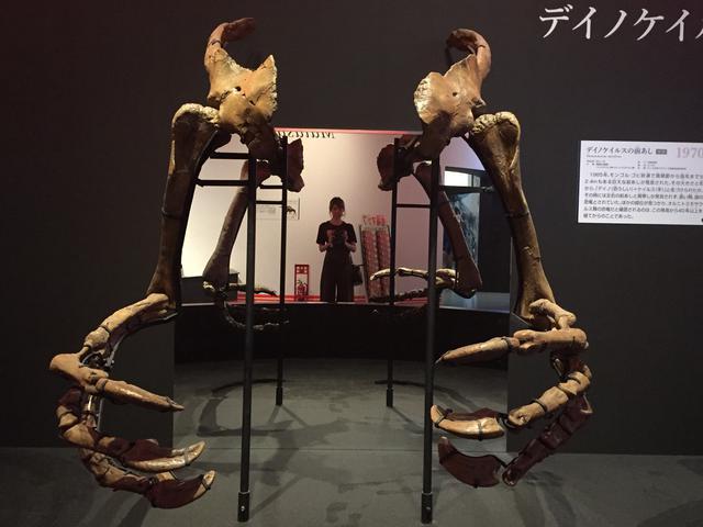 画像1: 「恐ろしい手」の名を持つ恐竜