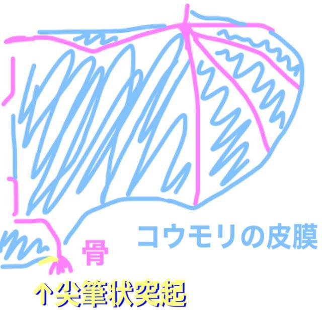 画像2: 翼竜みたいに皮膜がある恐竜「イー」