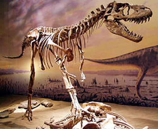 画像: ゴルゴサウルス ja.m.wikipedia.org