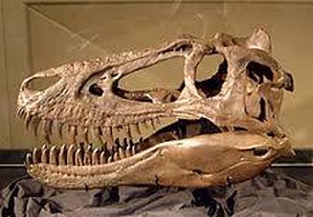 画像: ナノティラヌス(頭骨) ja.wikipedia.org