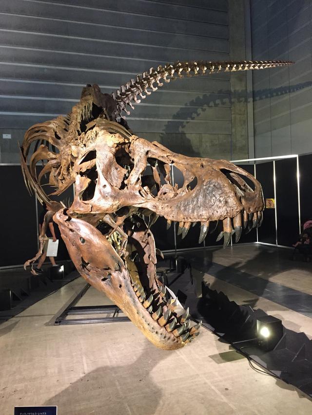画像: ティラノサウルス レックス(全身骨格)
