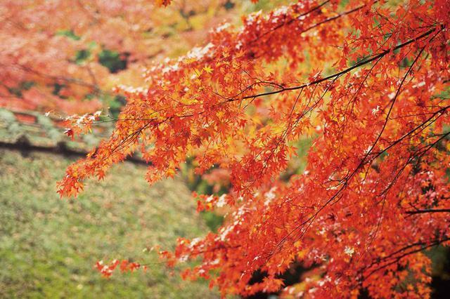 画像: コクを感じさせる醇酒は、料理の味を引き立たせてくれる。食の秋にふさわしい味わい