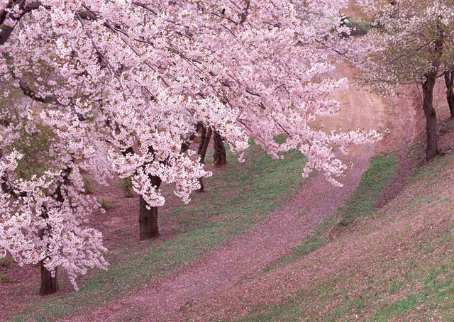 画像: 4タイプの味わいを四季で表現するのならば、華やかな香りを持つ薫酒は春から初夏にかけてのイメージ