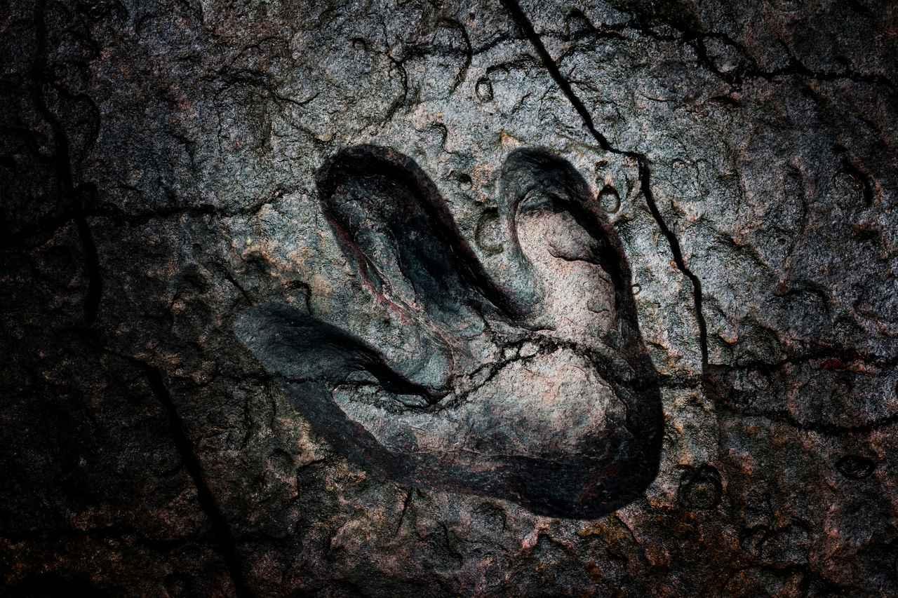 画像: 奇跡のアンキオルニスの化石は、意味を知るほどに面白い - dino.network | the premium web magazine for the Power People by Revolver,Inc.