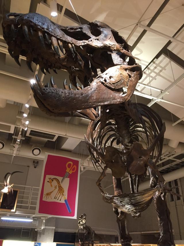 画像: 国立科学博物館のティラノサウルス