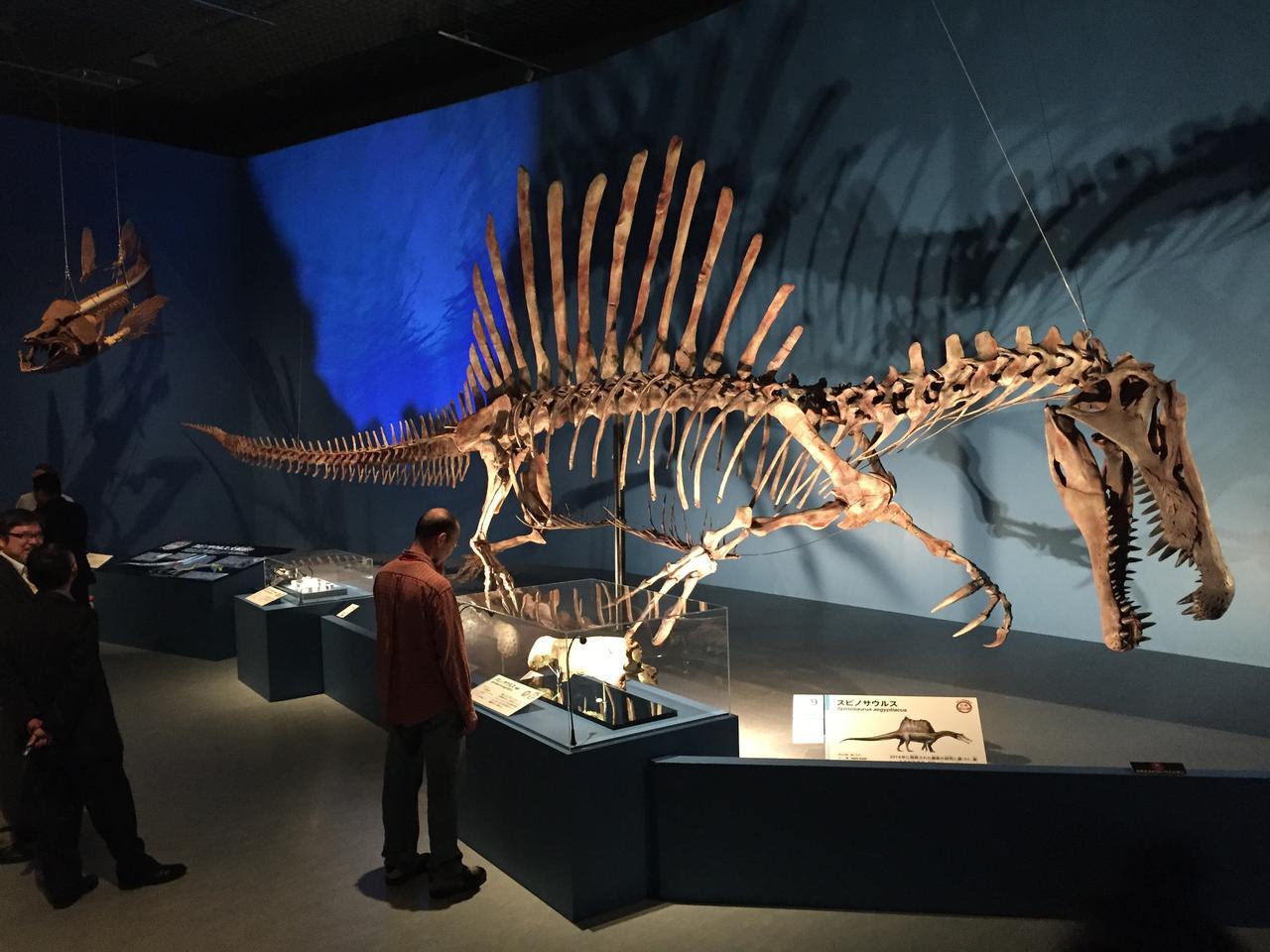 画像: スピノサウルス全身骨格