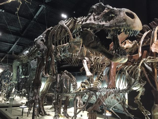 画像: 御船町恐竜博物館