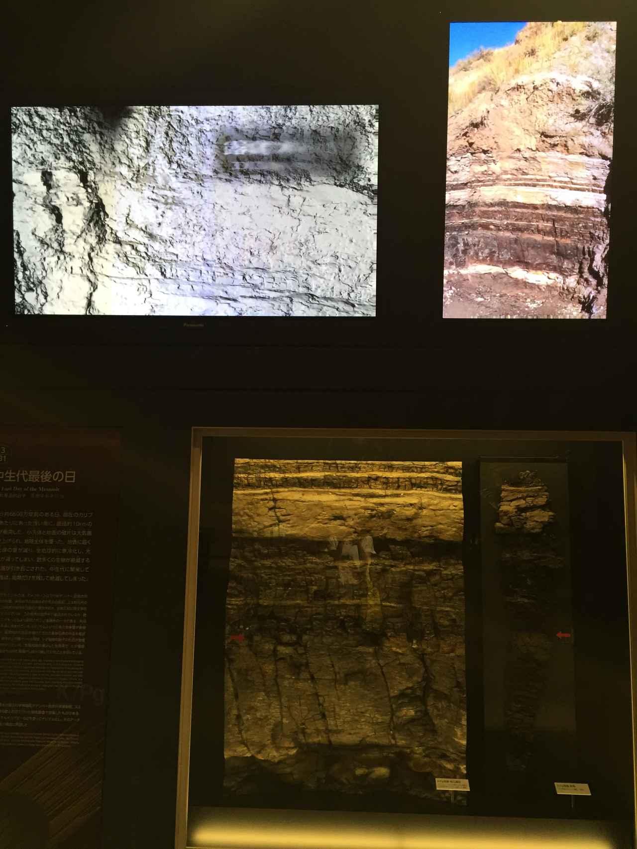 画像: 国立科学博物館でK/Pg境界見れます
