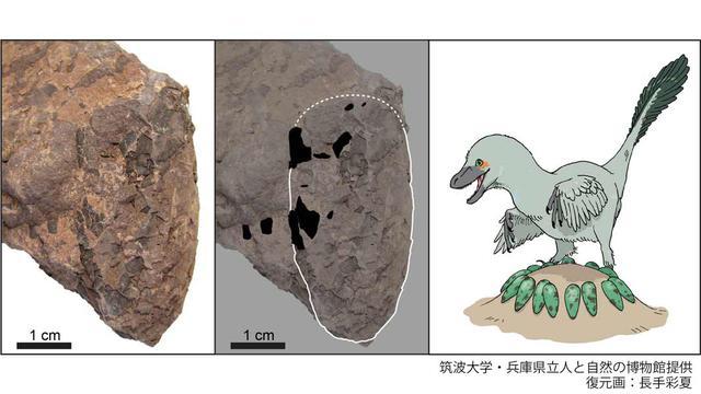 画像: www.guinnessworldrecords.jp