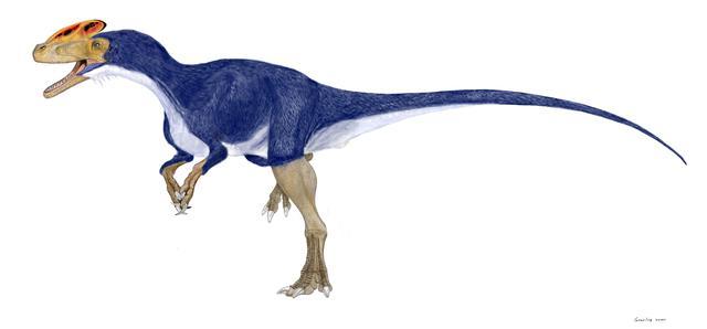 画像: 冠恐竜!? グアンロン