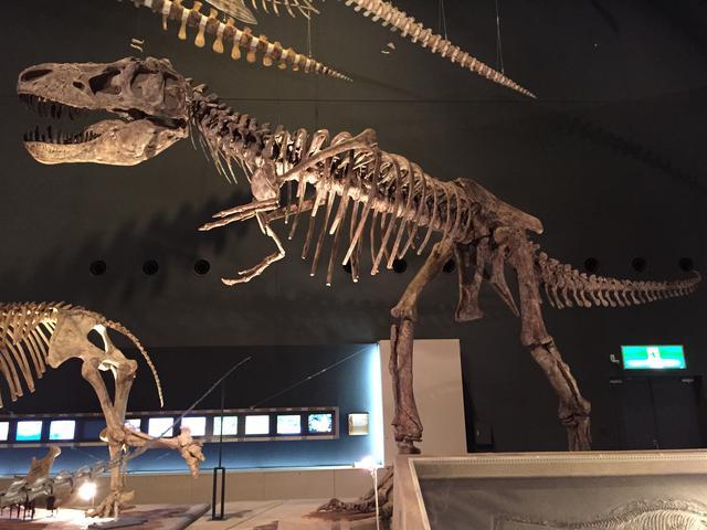 画像: 手が短い恐竜と言えば?