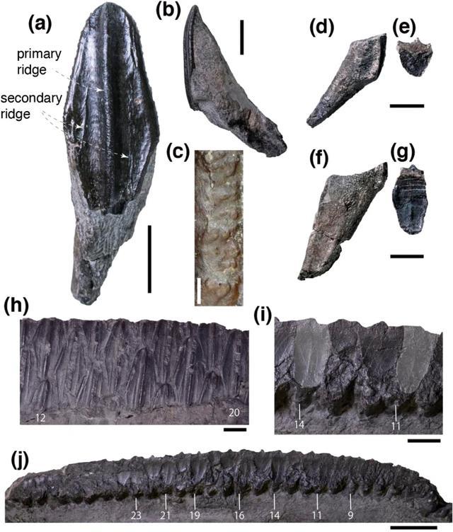 画像1: www.nature.com