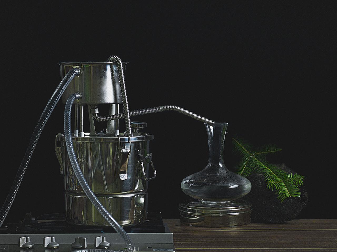 画像3: ブランド設立の背景【森の食用化を試みる実験】