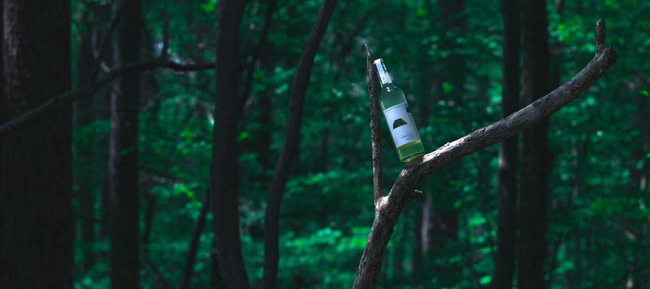 画像2: ブランド設立の背景【森の食用化を試みる実験】