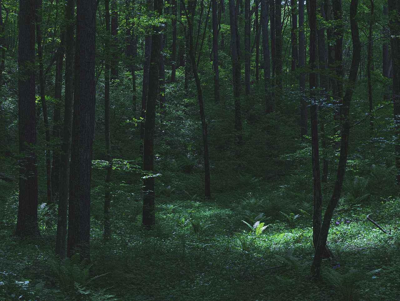 画像4: ブランド設立の背景【森の食用化を試みる実験】