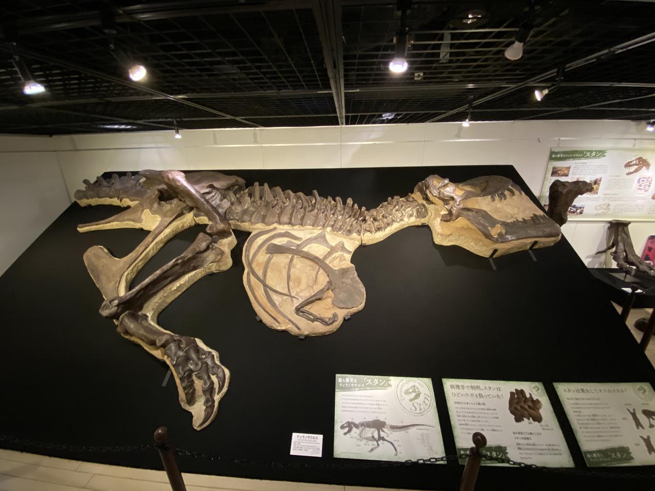 画像1: 第4章「肉食のスペシャリストティラノサウルス」