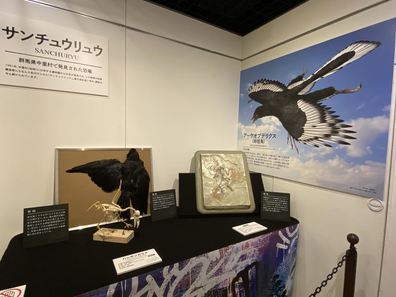 画像2: 第5章「恐竜から鳥へ」