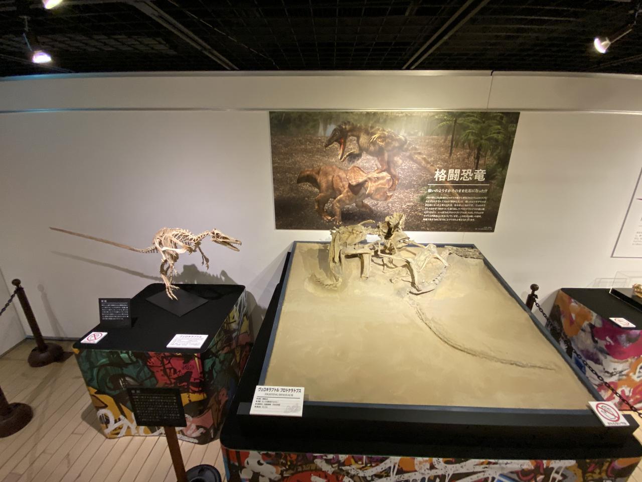 画像1: 第3部「格闘化石」