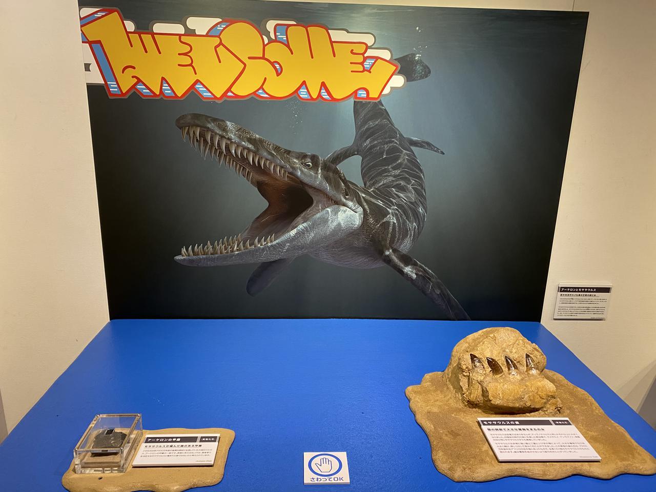 画像1: 第1章「恐竜時代の水辺」