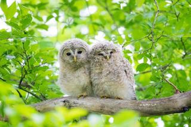 画像: 写真家・野口純一がソニーαシリーズの「動物対応リアルタイム瞳AF」を野生動物の撮影現場で試してみた!