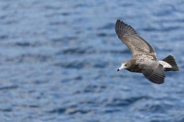 画像: ソニーα7R IVの高解像、AFの速度&精度に野鳥写真家・山田芳文が驚いた!