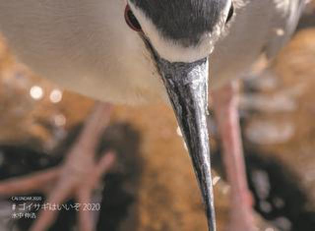 画像: 「カメラマン2020カレンダー」受注開始しました! ご注文はお早めに! チラっとご紹介Part7