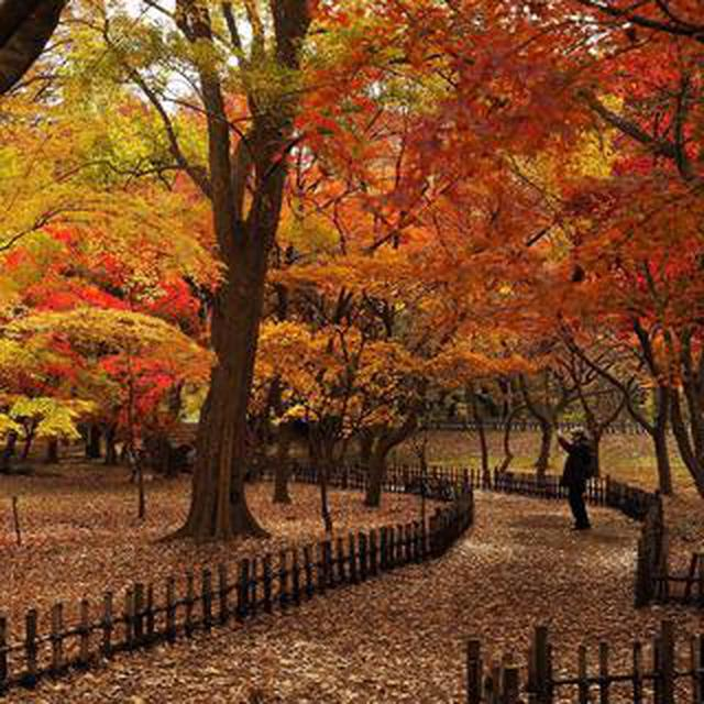 画像: 写真家・善本喜一郎さんによる「深大寺、神代植物公園 紅葉撮影ワークショップ」開催!