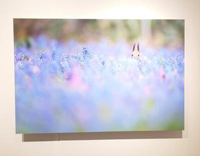 画像: 原田佳実写真展「りすだもん」がソニーイメージングギャラリー銀座にて、1月30日(木)まで開催中です。