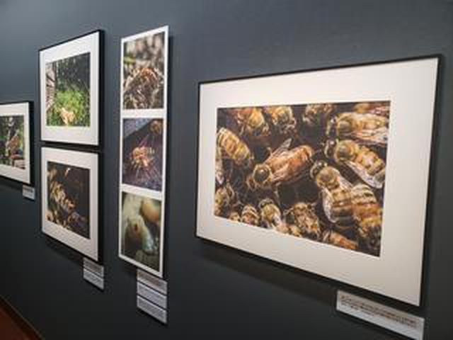 画像: 全国の養蜂家を訪ね、蜜蜂と人間が共生する姿を伝える 芥川仁写真展「羽音に聴く 蜜蜂と人間の物語」