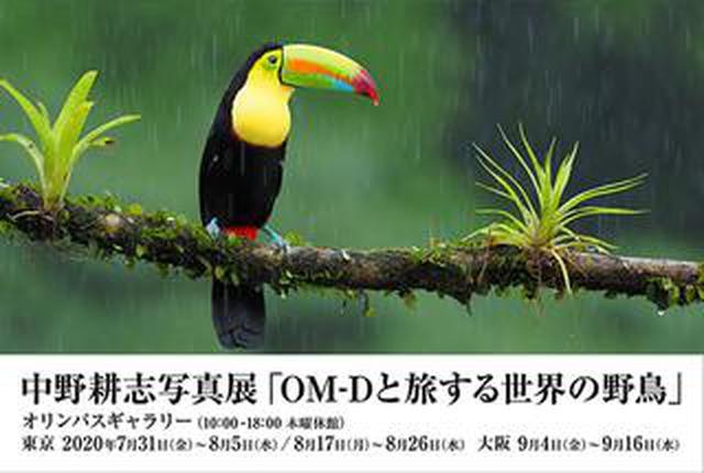 画像: 中野耕志 写真展 「OM-Dと旅する世界の野鳥」
