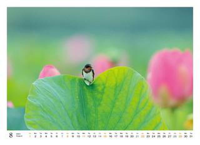 画像: カメラマン2021カレンダーのご紹介Part18 戸塚学「Oh My Little Birds」