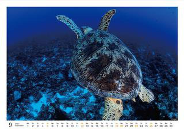 画像: カメラマン2021カレンダーのご紹介Part19 清水淳さん「「UNDER WATER PHOTOGRAPHER」