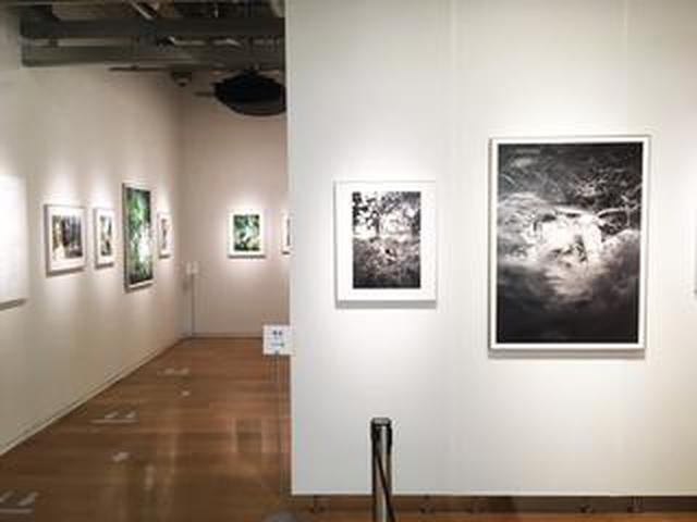 画像: 舞山秀一作品展『BOTANIZATION』。黒白プリントとカラープリントのヒュージョンです。