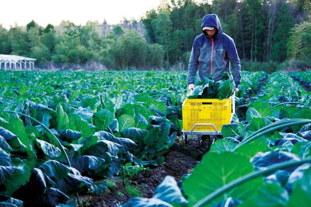 画像: 「ケール」は最も健康的な野菜のひとつとして人気を集めている。低カロリーで豊富な食物繊維、さらにはアンチエイジング効果の高いビタミンやカルシウムも豊富