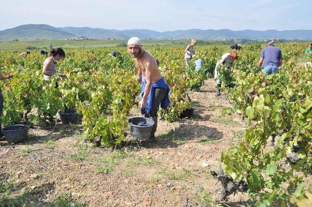 画像2: フランスワイン、2019年の収穫状況は?