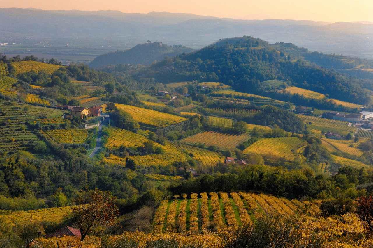 画像1: 三国ワインがゾーニンの取り扱いを開始