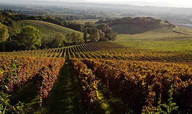 画像: トルジャーノの畑