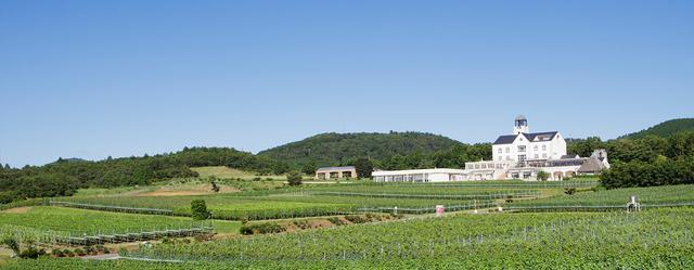 画像: 中伊豆ワイナリー 約10ヘクタールのブドウ畑