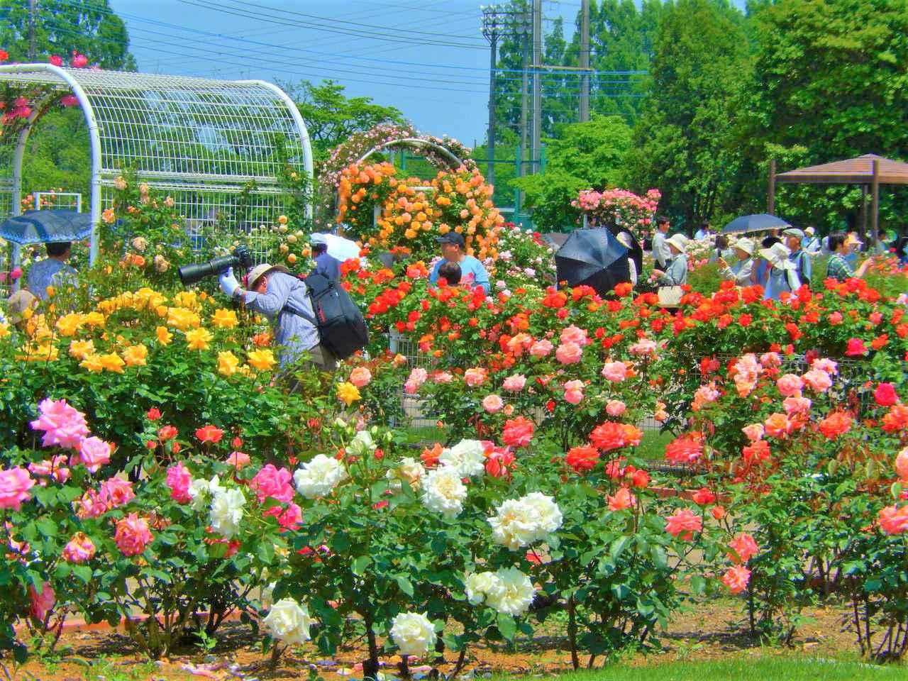 画像: 優美なバラが咲き誇るバラ園に、ビールとキッチンカーが出店