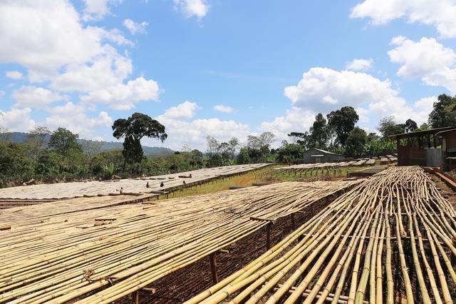画像2: エチオピアのコーヒー豆「ウォルカ・ハロハディ」とは?