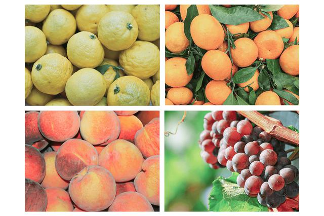 画像1: ゆず、甘夏、桃、ぶどう。ホップの苦味と相性の良い4種のフレーバー