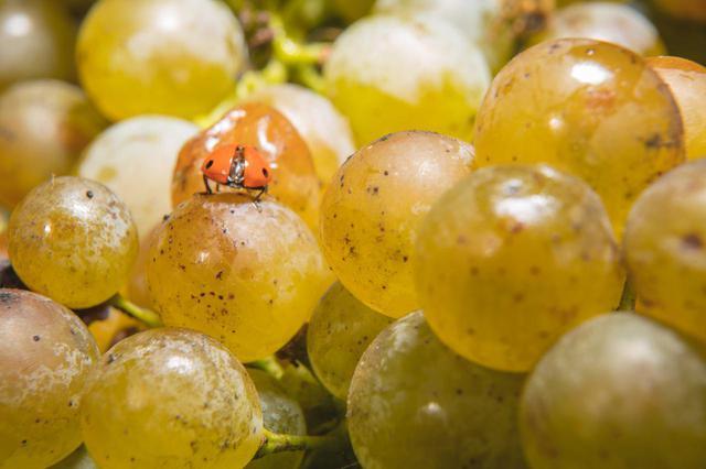 画像2: 成長目覚ましいワイン産地ルガーナの魅力
