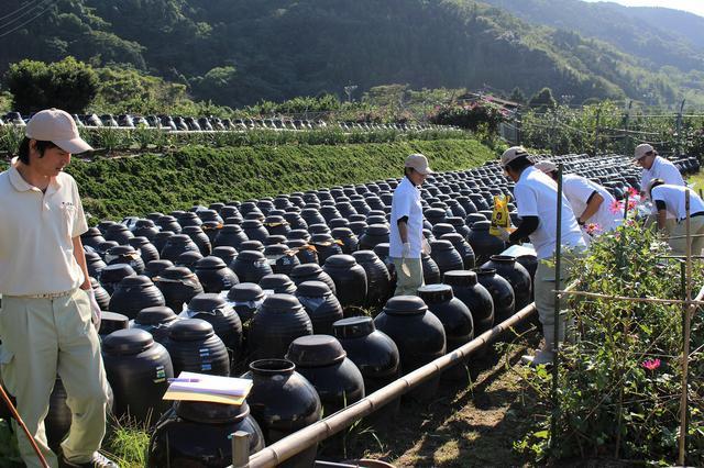 画像: 春と秋に行われる仕込み作業。壷畑に独特の甘い香りが漂う